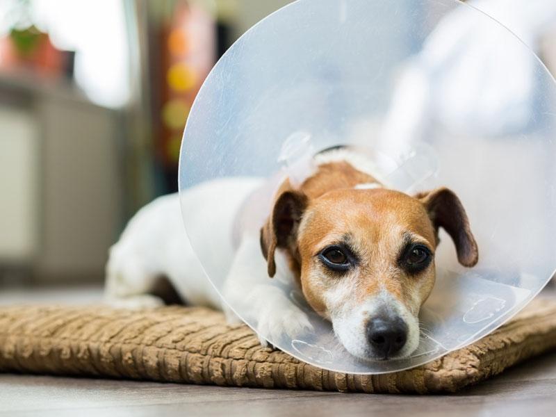 Krankenbetreuung aus Liebe zum Hund