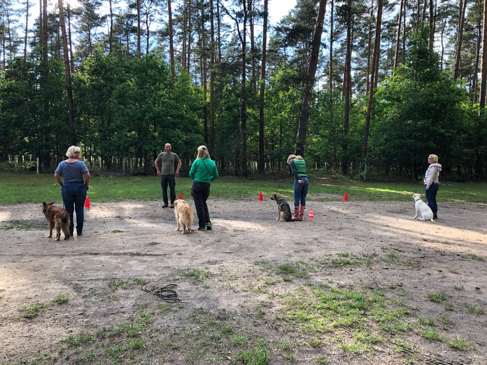 Gruppentraining bei Hundetrainer Oliver Ludwig. Individuelle Betreuung deutschlandweit.